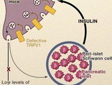 免疫性不孕