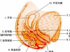 真菌性阴道炎