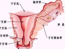 非淋菌性阴道炎