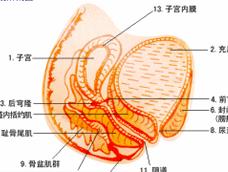 急性盆腔炎
